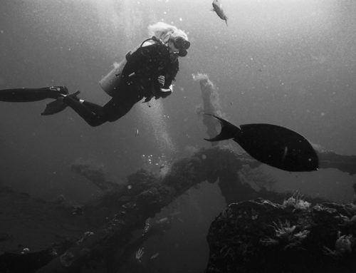 My Journey From English Teacher to Dive Master